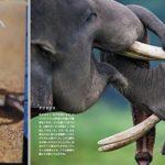 ユーモラスな図鑑『わらういきもの』近藤雄生さんの新刊がでました
